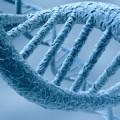 Le goji protège des lésions sur l'ADN