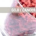 Les baies de goji pour prévenir et «soigner» le cancer