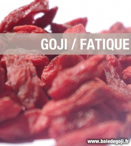 Le goji un aliment anti-fatigue